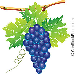 vector grape cluster
