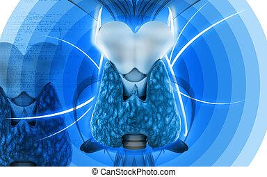 Thyroid - Digital illustration of thyroid in colour...