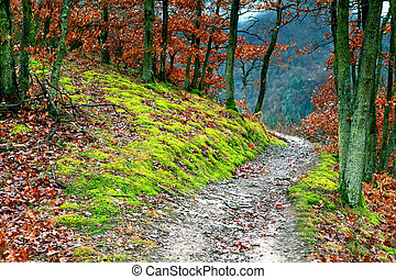path in the forest - narrow path in forest in mountains