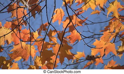 Fall leaves. Two shots.