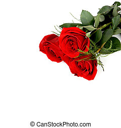 Roses in Corner with Copy Space