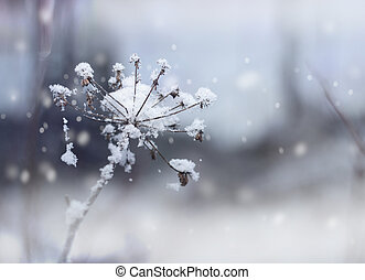 Frozen flower twig in winter snowfall - Frozen flower twig...