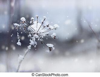Frozen flower twig in winter snowfall - Frozen flower twig...