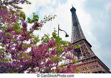 Flowering tree near the Eiffel Tower. Photo with tilt-shift...