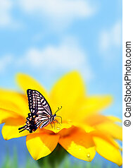 Monarch butterfly on yellow flower, natural background,...