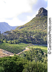 Vineyard and mountain peak backdrop