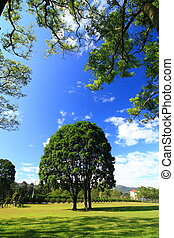Green trees under blue sky