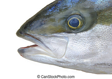 Yellowtail fish head - Closeup of head of yellow tail fish...