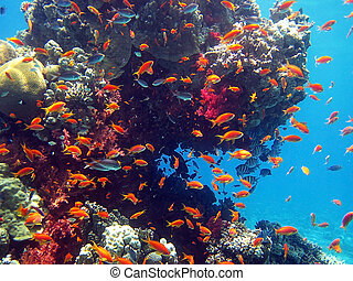 coral fish - Fish living in the coral of the Red Sea...