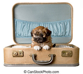 Brown Puppy in Vintage Suitcase - Brown Puppy in a blue...
