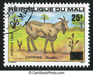 Billy goat - MALI CIRCA 1984: stamp printed by Mali, shows...