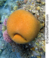 Coral smiley - yellow coral-like sad smiley face at the...