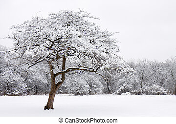 lone snow covered tree stands out from the forest