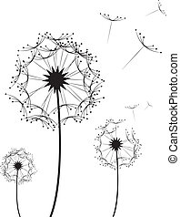 Dandelion Flower - Three dandelion flowers blowing in the...