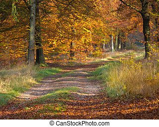 Bent forest lane in autumn colors