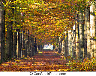 Large forest lane in autumn colors