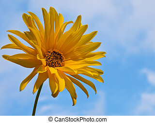 Yellow blooming flower against blue sky