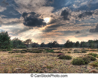 HDR image of open heathland with forest backdrop