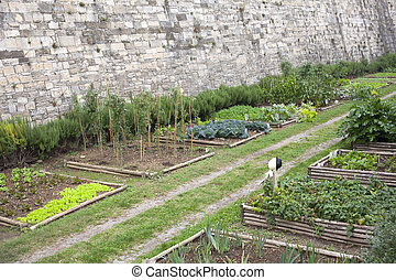 Vegetables garden - Cabbages and lettuces in a vegetables...