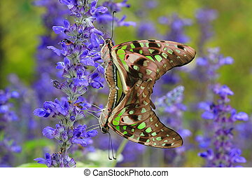 Love of butterfly with green and blue background in the park