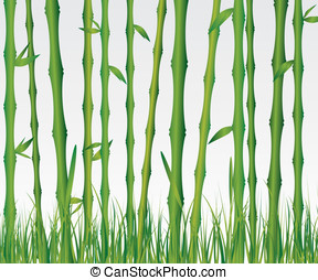 Bamboo forest illustration