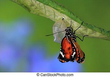 surprenant, moment, sur, papillon, changement