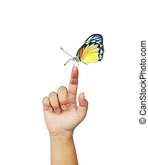 Yellow orange and black butterfly on womans hand