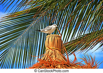 Seagull on a straw roof