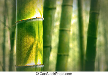 bamboo background  - bamboo background