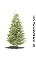 tree fir pine evergreen shadow 3d