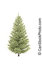tree fir pine evergreen shadow 3d