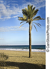 Palm on the beach - A palm standing alone in Marbella Costa...