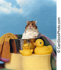 Hamster in a bath tub - a tiny brown and white teddy bear...