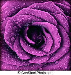 Purple dark rose background, abstract floral natural...