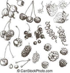 Berry set. - Vector illustration of hand-drawn berries.