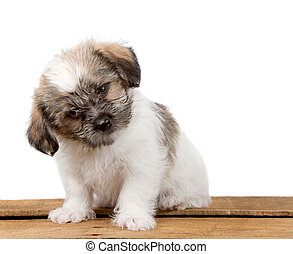Cute Puppy with a confused look - a cute white and black...