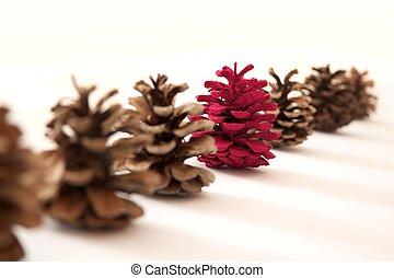 Red pine cone - Sequence of cones with an emerging