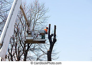 Pruning trees  - Pruning trees, worker on a crane