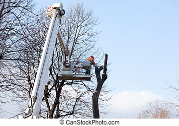 Pruning trees, worker on a crane