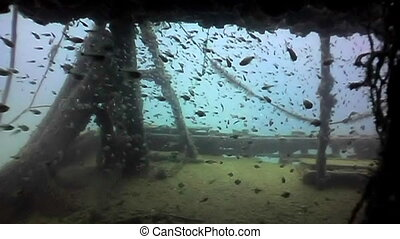 shipwreck - Deck of a shipwreck with thousands of tiny...