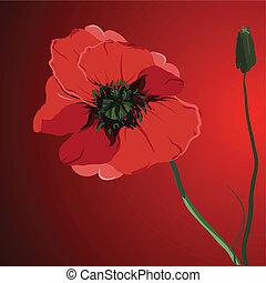 red flower poppy vector memorial illustration