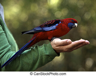Lory Bird - Lories and Lorikeets in a Nature Reserve eating...