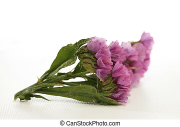 Purple Pink Wild Flower