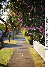 Pathway with Flowers in one Afternoon