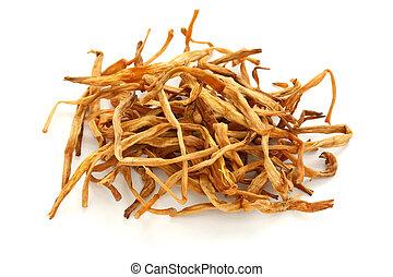 dried lily buds