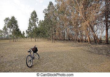 美しい, 公園, 自転車