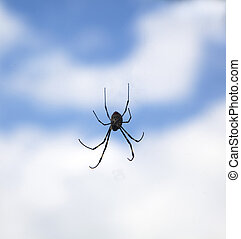 spider in the air with cloud background