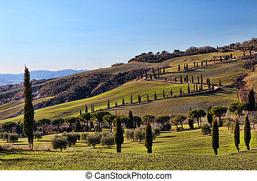 Tuscany Val d'Orcia Road of Cypress HDR - Tuscany Val...