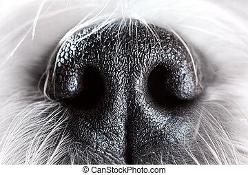 Dog nose close-up - Shih tzu dog nose close-up.