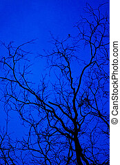 creepy background - tree branches silhouettes at twilight,...
